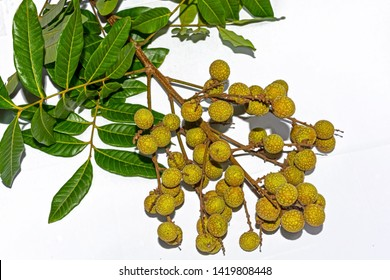 Dimocarpus longan.A bunch of fresh Longan fruits with green leaves on white background.Top vew.