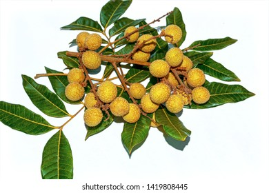Dimocarpus longan.A bunch of Longan fruits with green leaves on white isolated background
