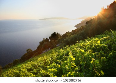 Dingac vineyard position, peninsula of Peljesac, Dalmatia, Croatia