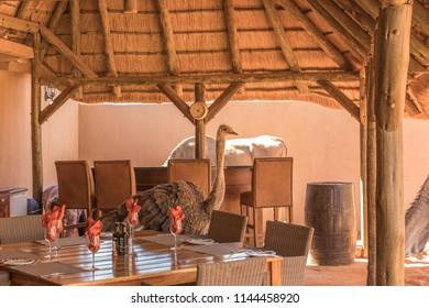 Dining room Kalahari Game Ranch, Kalahari desert, Namibia.