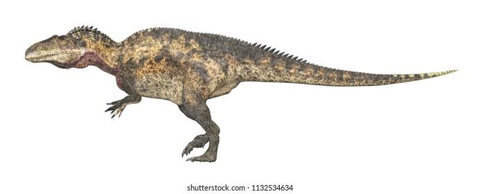 Dinosaur Acrocanthosaurus isolated on white background Computer generated 3D illustration