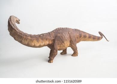 dinosaur , Apatosaurus  on white background .