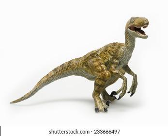 Dinosaur called velociraptor, on white background