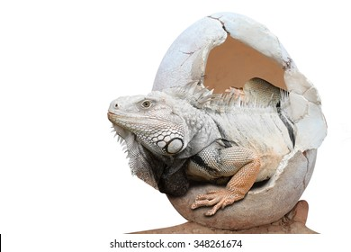 Dinosaur emerges from an egg isolated on white background with clipping path