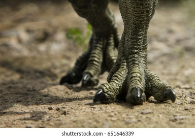 Dinosaur feet walking of Tyrannosaurus ( T-rex ) on the ground.
