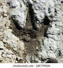 Dinosaur footprint in rock