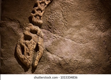 Dinosaur fossil for background