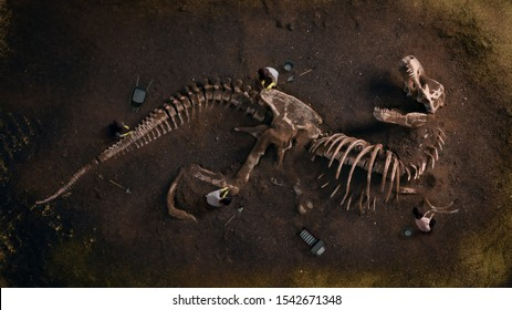 Dinosaurir Fossil (Tyrannosaurus Rex) von Archäologen