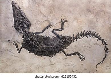 Dinosaur fossils on sand stone background