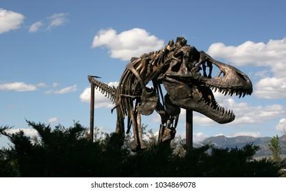 Dinosaur Museum of the Rockies Montana USA