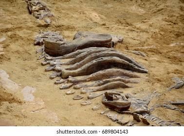 Dinosaur simulator fossil in sand background