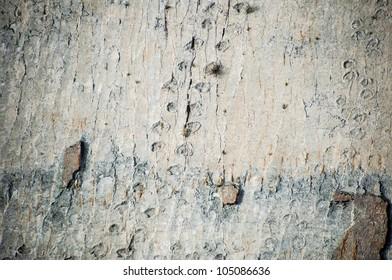 Dinosaur Tracks in Bolivia
