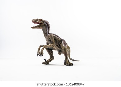 dinosaur , Velociraptor on white background .