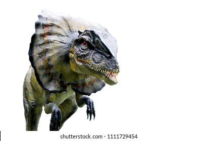 dinosaurs portrait.Dinosaur Dilophosaurus isolated on white background.