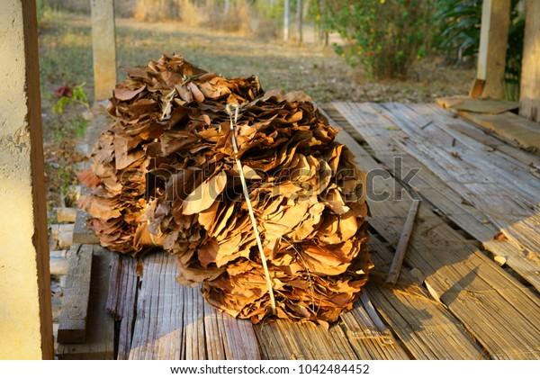 Dipterocarpus tuberculatus  Banana leaf dry Dry to the liver roof.
