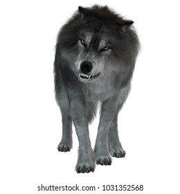 Dire Wolf on White 3d illustration - The Dire Wolf was a prehistoric carnivore that lived in North and South America during the Pleistocene Period.