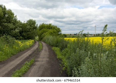 dirt, country road next to a field in the countryside, grass, yellow flowers, sky with clouds