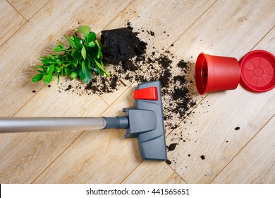 Dirt from the fallen flower pot with a home on the laminate to vacuum
