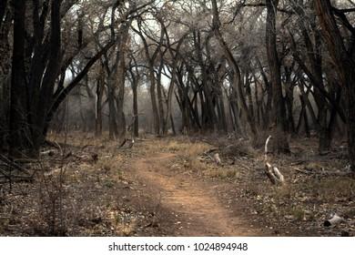 Dirt path into dark, spooky forest. Rio Grande Valley State Park, Albuquerque, New Mexico.