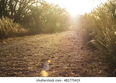 Dirt path leading into sunlight