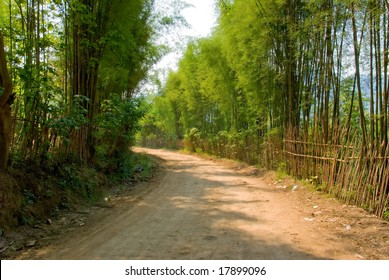 dirt path lined with bamboo shoots