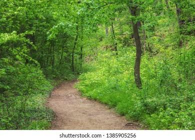 Dirt path running through deep green forest