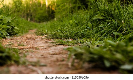 A dirt path in the summer field among the grass close-up. View from ground level.