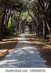 Dirt pathway in a Mediterranean pine forest