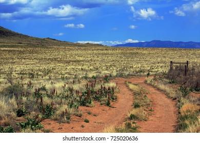 Dirt Road across Desert