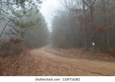 A dirt road in Alabama vanishing into the fog.