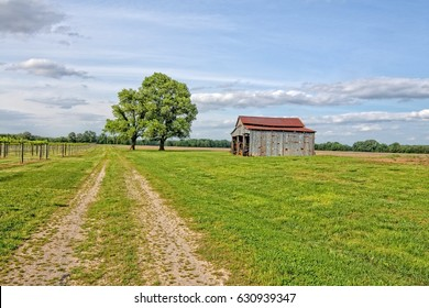 Dirt Road along a vineyard with a old barn and meadow