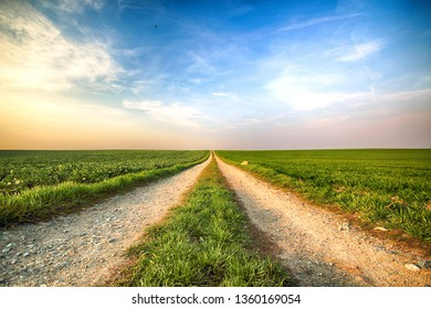A dirt road among green fields.