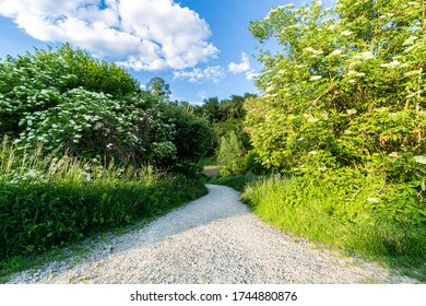 Dirt road among trees and cereals. An ideal place for walks. Relax under the blue sky. Pozna spring in the countryside. Green trees and bushes. A trip to the forest.