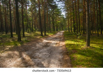 dirt road in the autumn forest