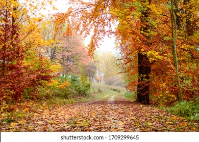 A dirt road in an autumn forest, very colorful fall foliage, the air is hazy