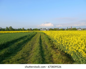 Dirt road between canola rapeseeds fields with view of little town near Bonn Germany