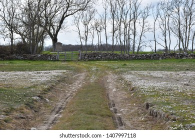 Dirt road by spring season in a plain grassland at the swedish island Oland