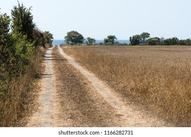 Dirt road to the coast in a dried landscape at the swedish island Oland