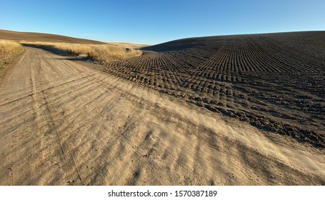 Dirt road converges with tractor tread in Palouse Wheat Fields