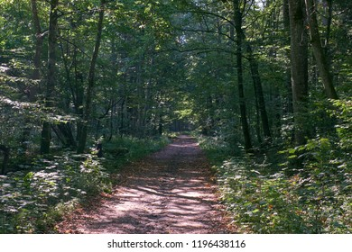 Dirt road crossing deciduous forest in fall morning,Bialowieza Forest,Poland,Europe