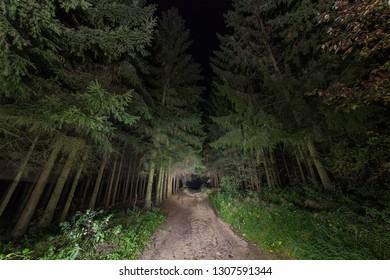 Dirt road deep in the fir forest.
