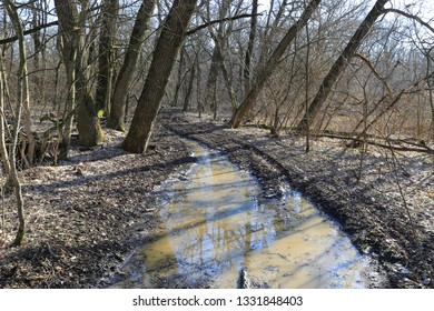 dirt road in deep forest in sunny spring day