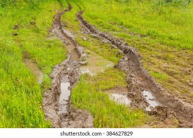 Dirt road with deep wet rut in flowering sunny meadow.
