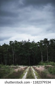 Dirt road disappearing into dark forest under cloudy sky.