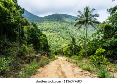 A dirt road down among the jungle and palm trees on a tropical island in clear weather