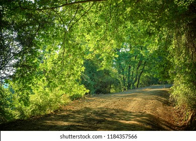 dirt road and filtered sunlight in tunnel trees, Greece