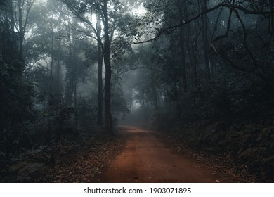 Dirt road in the fog and rain tropical forest