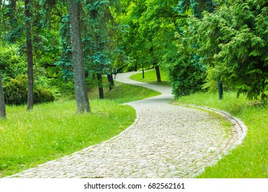 Dirt road at the forest background