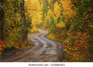 A dirt road in a forest in fall in Fernie, British Columbia, Canada
