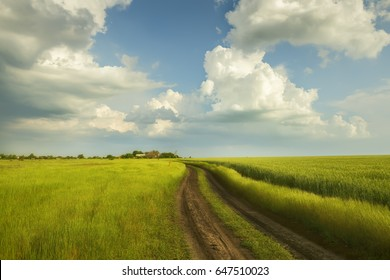 A dirt road in the green field of wheat. A beautiful stormy sky and rural houses in the distance. Beautiful spring, summer landscape.